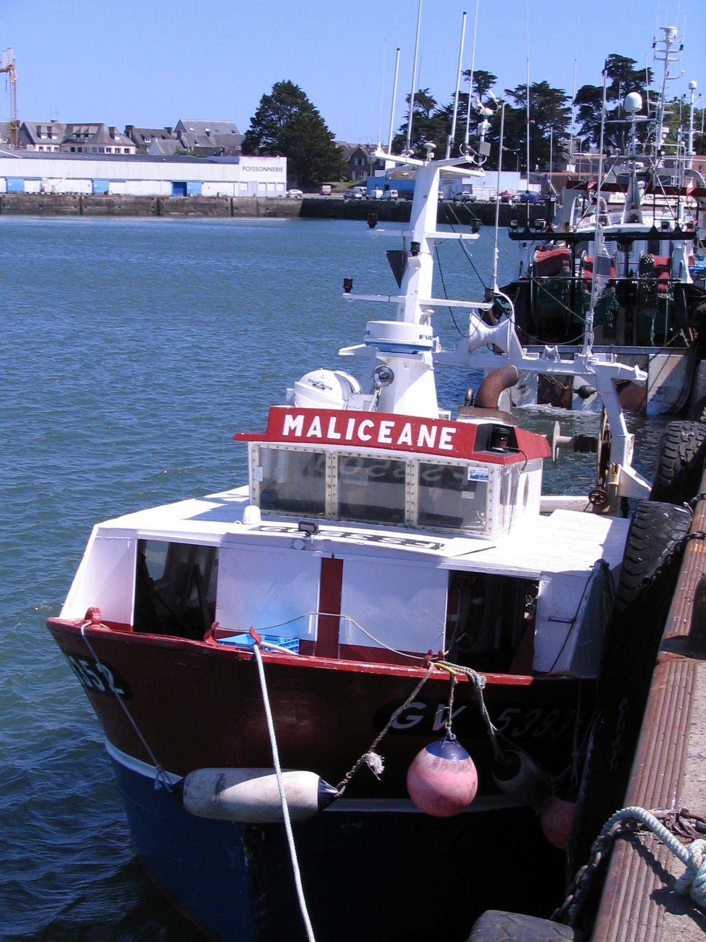 200514 maliceane b 2